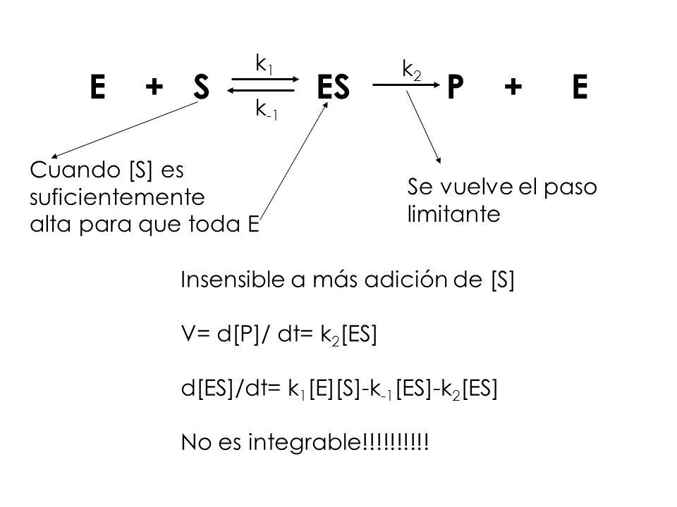 E + S ES P + E k1 k2 k-1 Cuando [S] es suficientemente